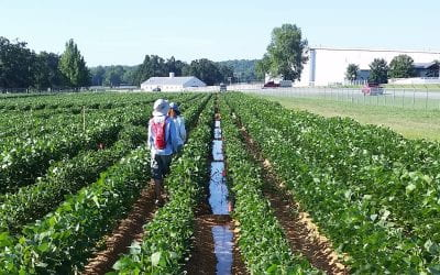 Soybean response to dicamba in irrigation water under controlled environmental conditions