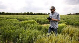Wheat Selection