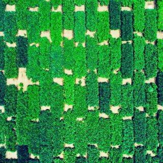 aerial_soybean