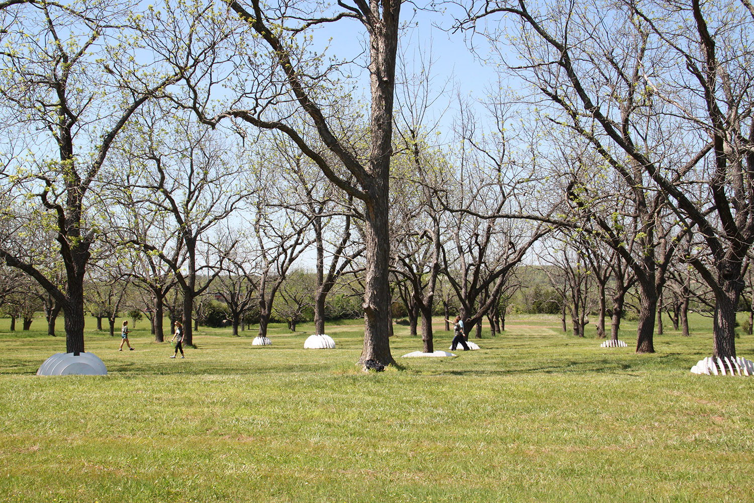 The installation was inspired by and is located on a walnut grove that once belonged to Noah Drake, a former University of Arkansas professor. (Photo by Michelle Parks)