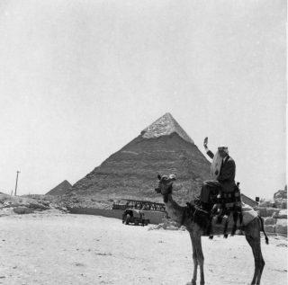 Bales at Giza
