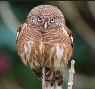ALL the little birdies go tweet, tweet, tweet