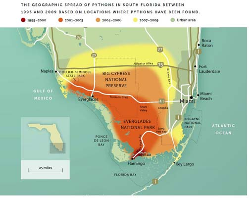 "There is no solid estimate of how many Burmese pythons are in Florida, but studies conducted by J.D. Willson's research group have identified approximately where the ""founder"" population originated and how quickly the snakes have expanded in the last two decades. 