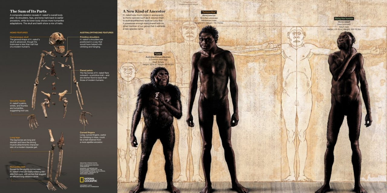 U of A Anthropologist Part of Team That Identified New Human Ancestor
