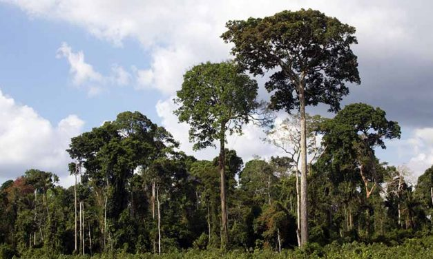 What Trees Can Tell Us About the Amazon