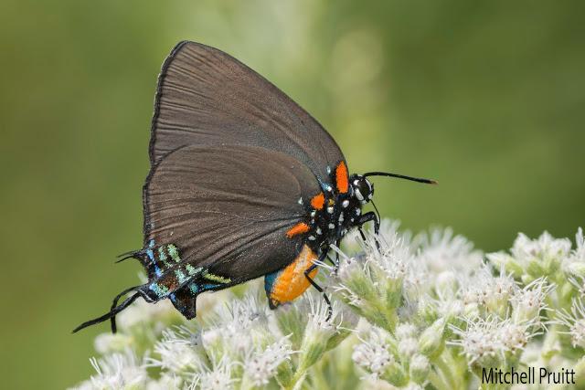 A Bounty of Butterflies