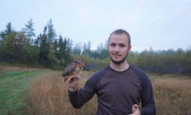 Chasing Woodcock