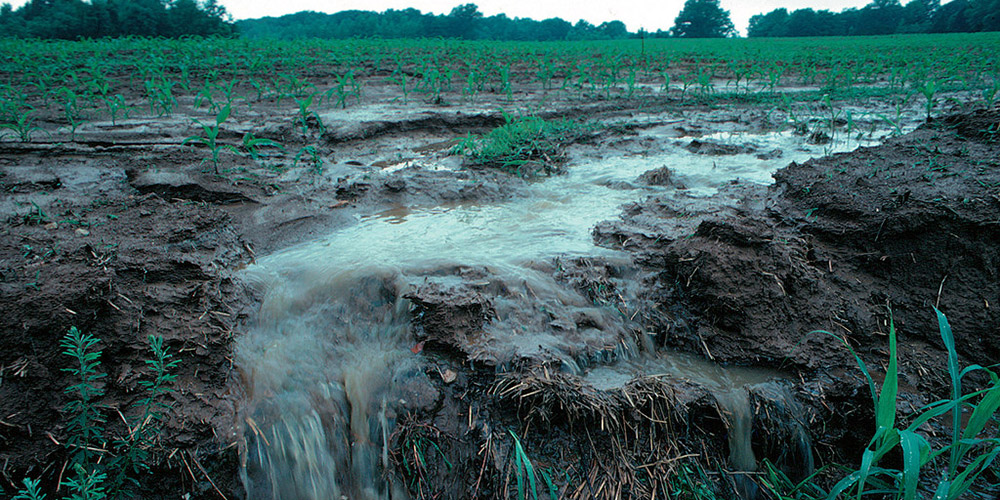 NSF Funds Project to Create Commercial Fertilizer Out of Wastewater Nutrients