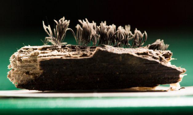 U of A Biologist Publishes Three New Books on Slime Molds, Mushrooms
