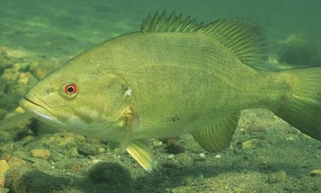 Researchers Study Impact of Climate Change on Buffalo River Fish