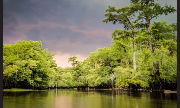 Researchers Document the Oldest Known Trees in Eastern North America