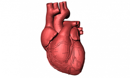 NIH Award Supports Research on Biological Drug to Rebuild Heart Tissue