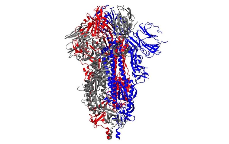 Chemist Developing 3D Simulations of Coronavirus Spike Proteins