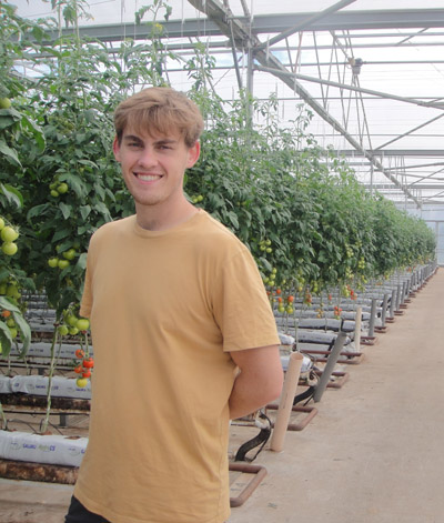 young man in yellow t-shirt in greenhouse, in front of tomato plants.
