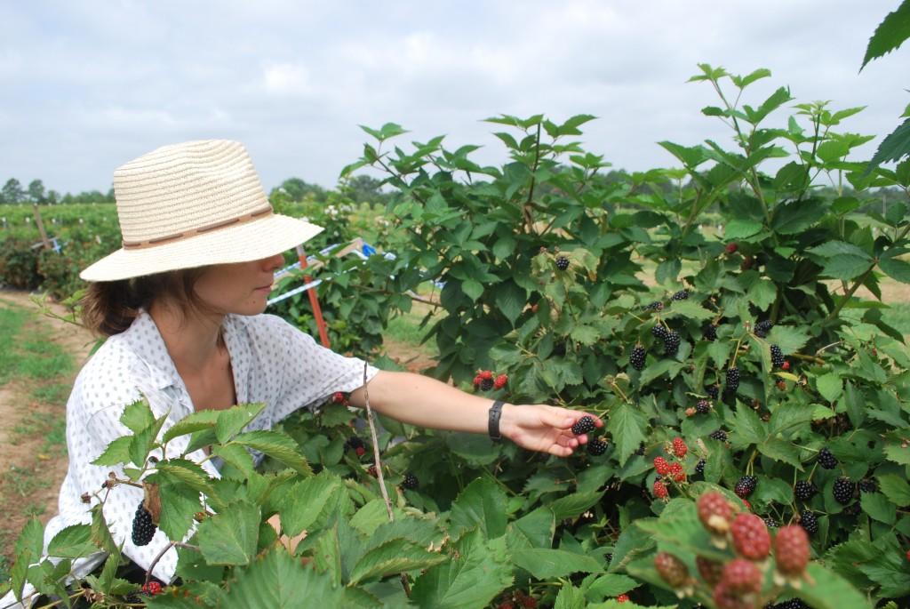 girl in hat picking blackberries on farm