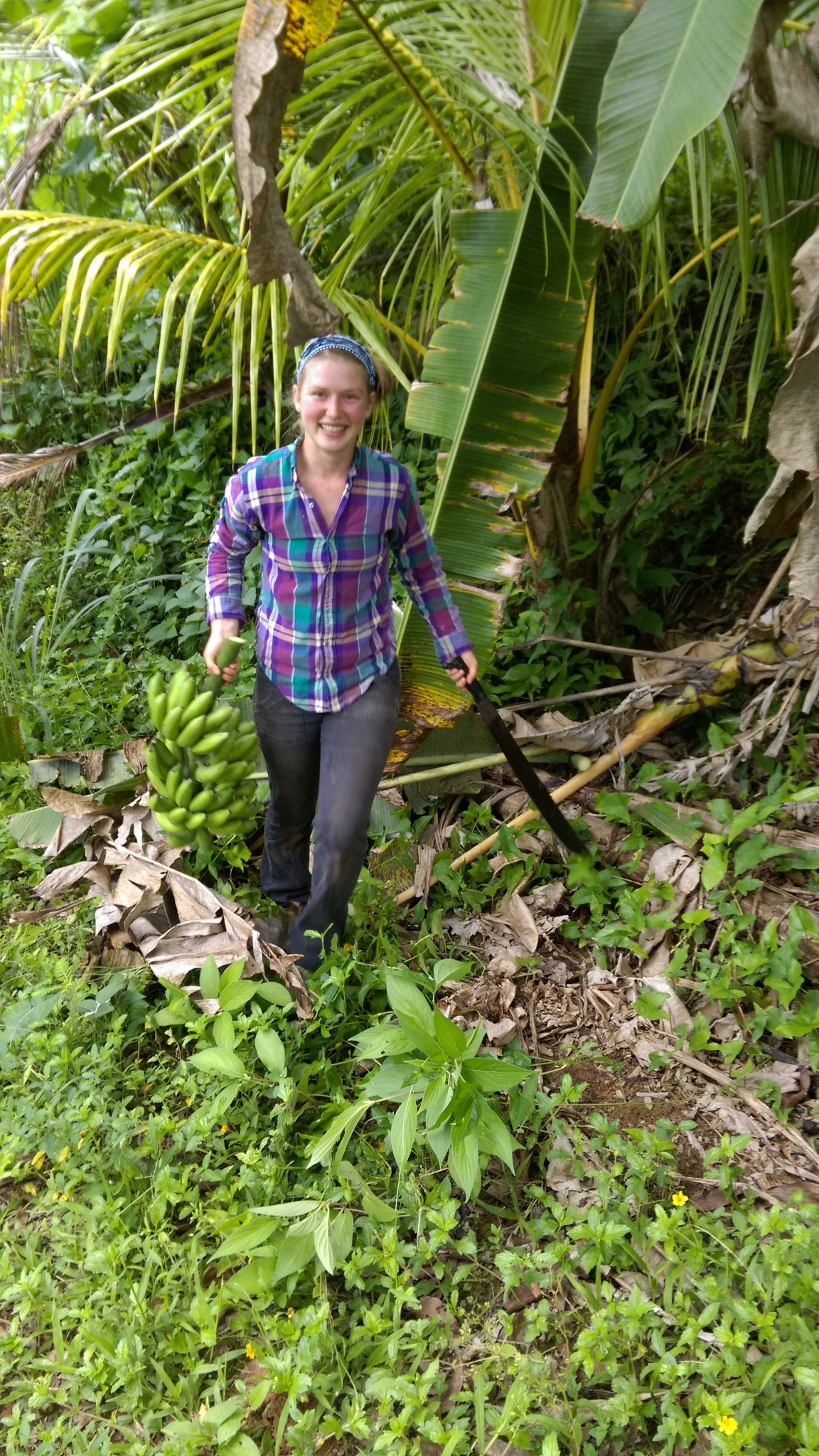 Young woman carries a machete and a stalk heavily weighted with green bananas.