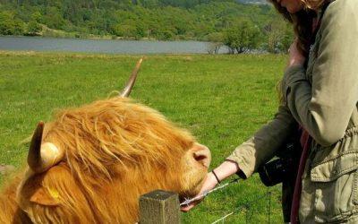 Callan Lichtenwalter: Forming (Furry) Friendships in Scotland