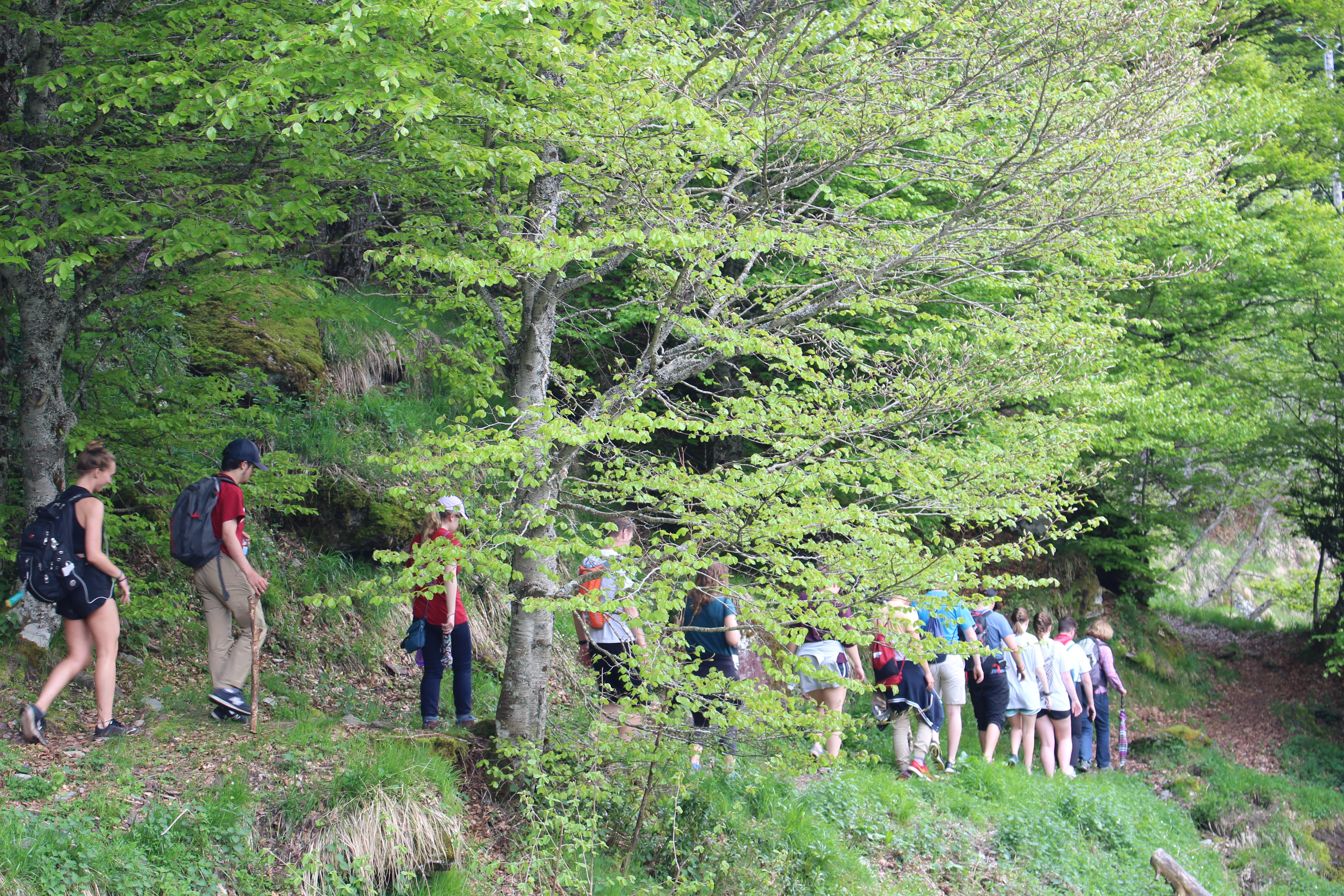 A group of college students are hiking on a wooded mountain.