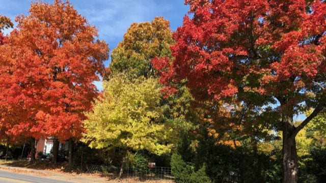 T&P Journal: About November