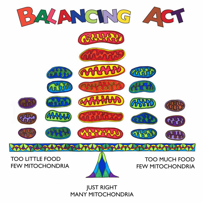 A Good Balance