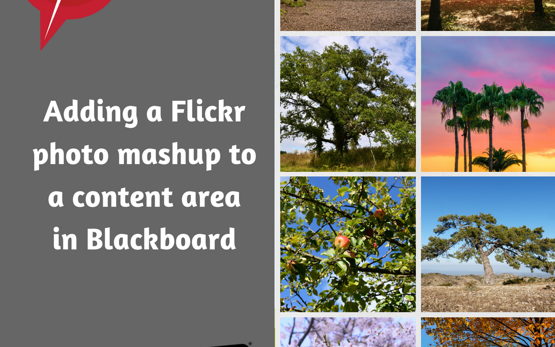 Adding a Flickr photo mashup into the content area in Blackboard