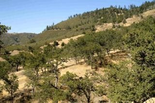 Blue oak woodland rapidly transitions to both chaparral and mixed conifer woodlands at Figueroa Mountain (FIG).
