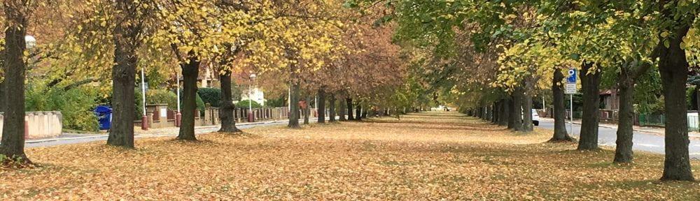 Autumn_Lidice17_Tom