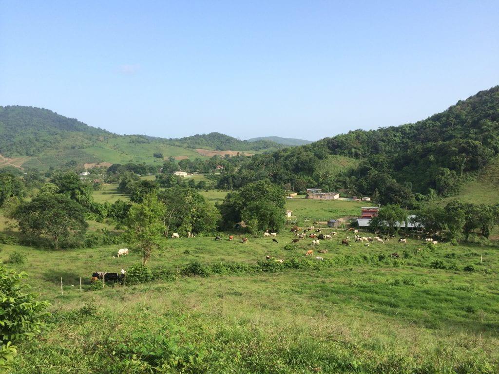 Farm near Naguabo, Puerto Rico