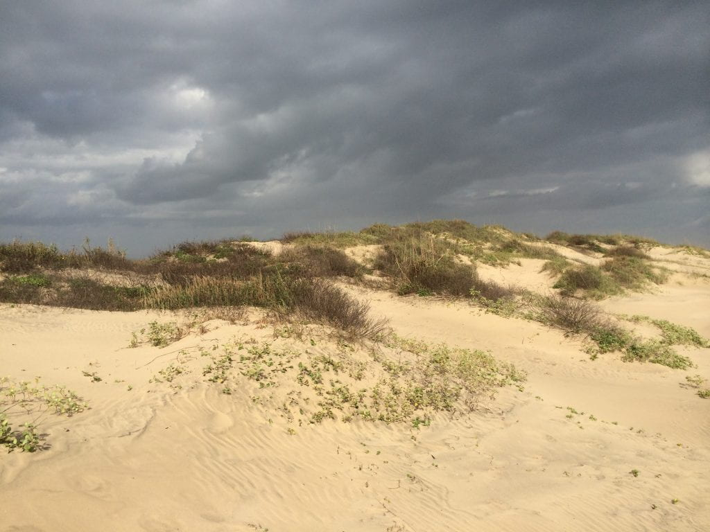 Dunes on South Padre Island