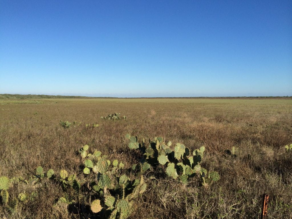 Coastal Plain in south Texas
