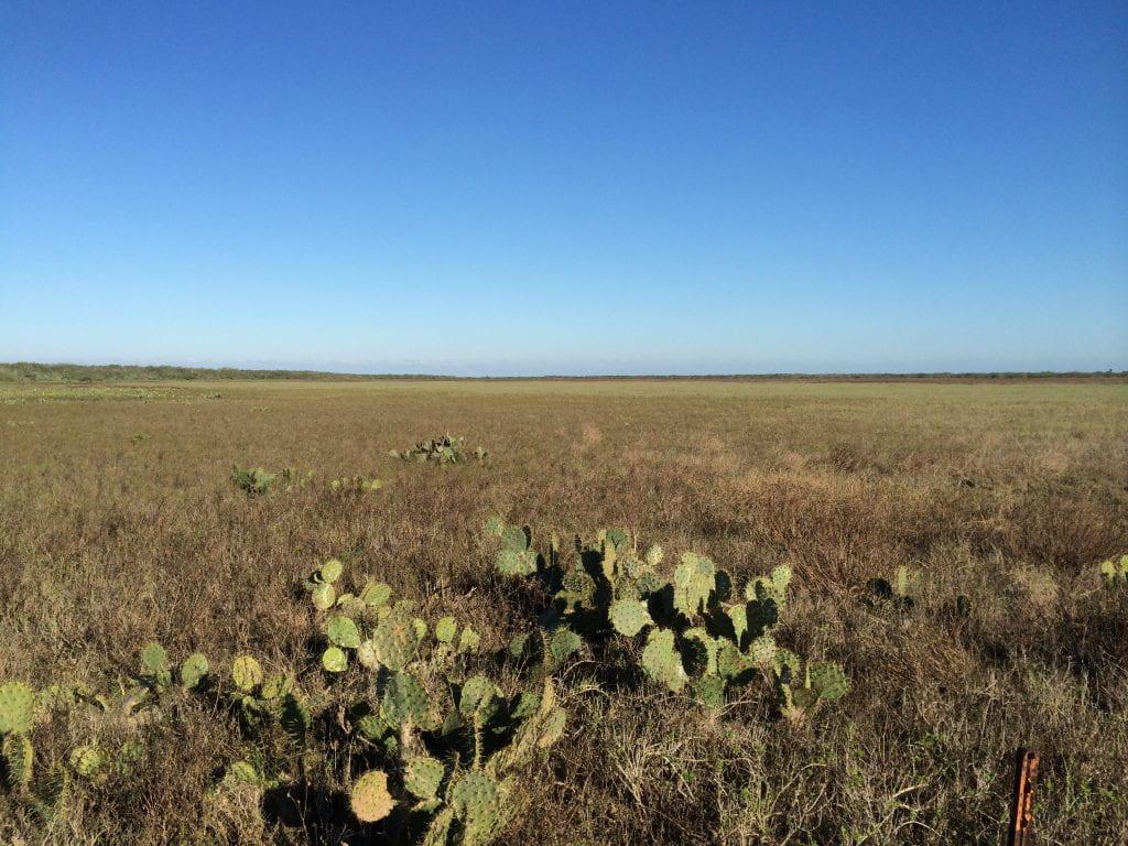Coastal Plain in south Texas