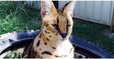 Sophia Moore - Austin Zoo