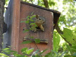 Figure 4: Squirrel immediately after a soft release
