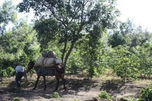 A man leads a horse carrying cargo down a path