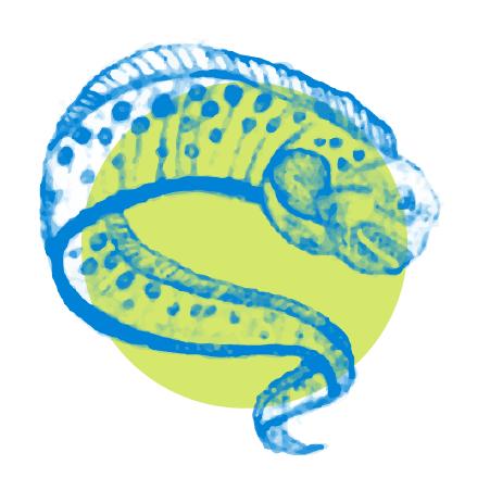 eel button