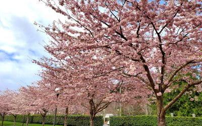 Akinrinade_Floral_Trees_01