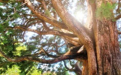 Akinrinade_Tree_02