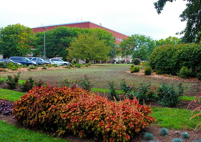 campus_turf1
