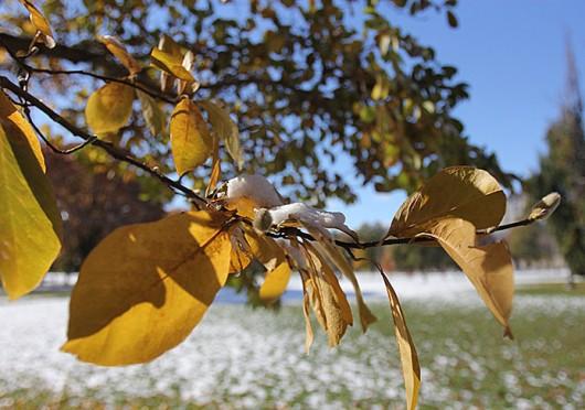 campus_tree