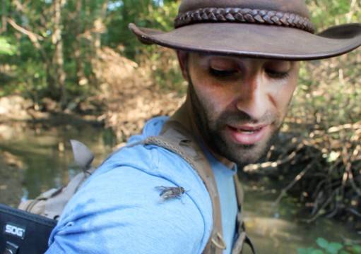 Coyote Peterson interacts with a fly. Credit: Chelsea Spears / Multimedia editor