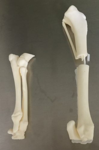 All animal patients with unique or challenging disfigurement are given the option to allow their CT scans to become a 3-D model for research and education purposes. Credit: Rubina Kapil