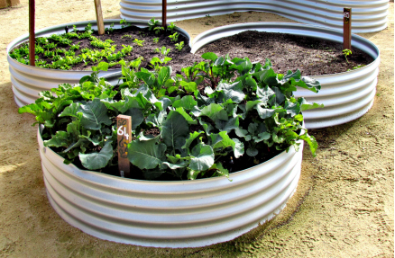 Ohio State's program allows Vinton County residents to grow fresh food in container gardens and a community garden. Credit: Courtesy of Ohio State
