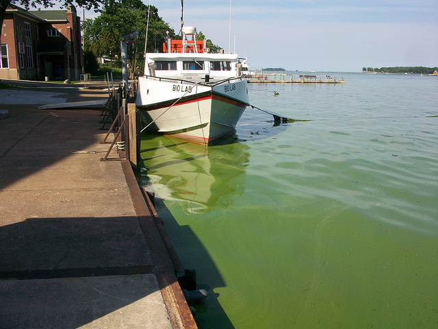 A boat sits in an algae-filled Lake Erie at Stone Lab, a freshwater biological field station and research and teaching center owned by Ohio State. Credit: Courtesy of Christopher Winslow