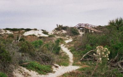 Florida on Film