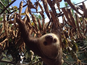 A sloth sighting!