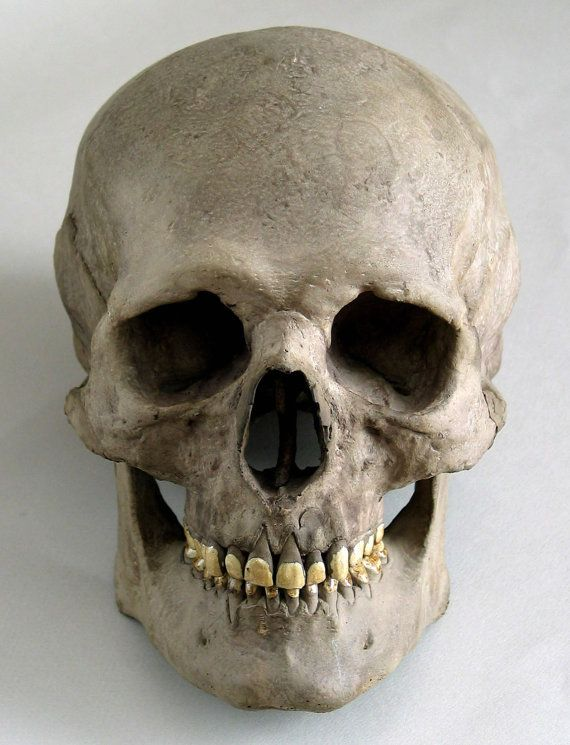 7db3176e3822d8c0f54f8d537057422fhuman Skull Anatomy Head Anatomy