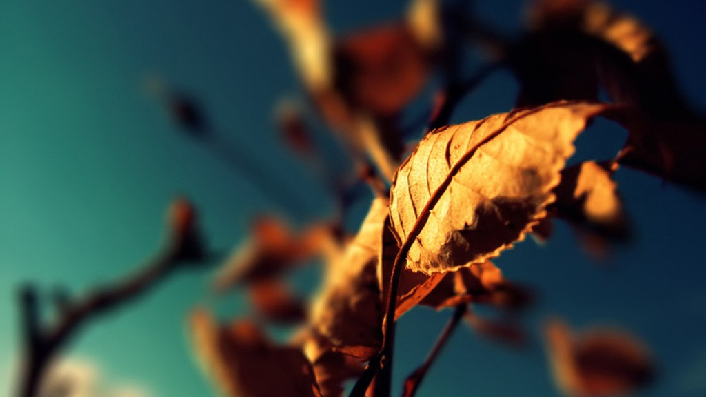 6979457-autumn-leaves-photography