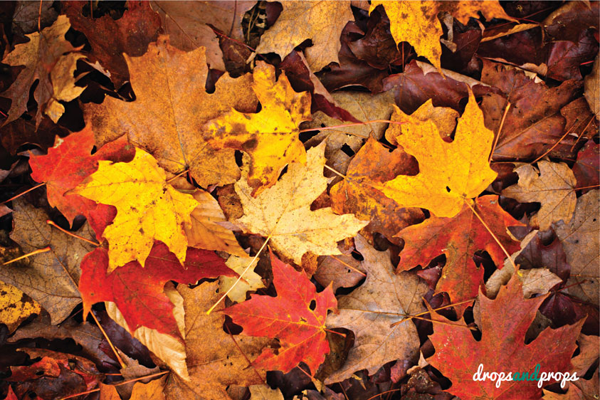fall-leaves_sample