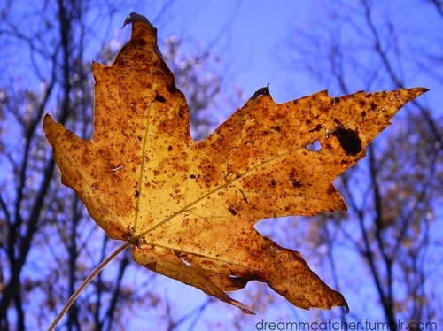 autumn-fall-leaf-nature-orange-photography-favim-com-105094