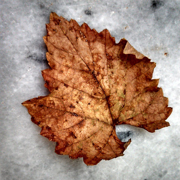 fall-leaf-photography